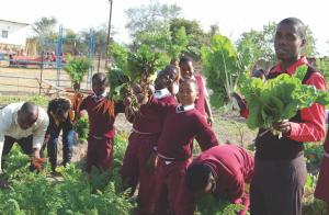Become a Reel Gardening Volunteer